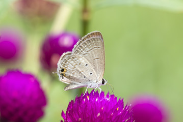 Butterfly on pink flower with grass.