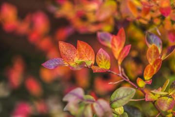 Fototapeta Jesienne liście obraz