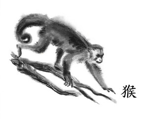 "Monkey oriental ink painting with Chinese hieroglyph ""monkey"". Gracile capuchin walking on tree branches. Isolated on white background Symbol of the new year of monkey."
