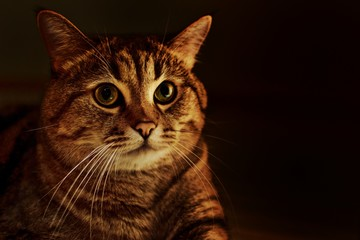 Photo of the cat on a dark background