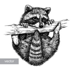 engrave raccoon illustration