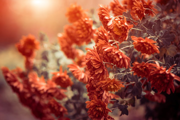 red flowers at windy day Wall mural
