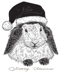 rabbit Santa Claus