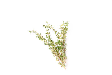 thyme isolated on a white background