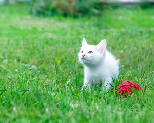 little kitten with a ball of yarn on the green grass