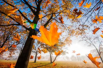 Fototapeta Spadające liście obraz