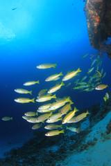 Underwater scene - fish on ocean coral reef
