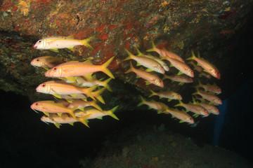 Underwater scene coral reef and fish in ocean