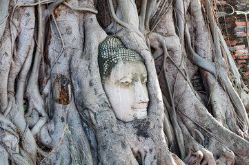 Head of Buddha, with tree trunk and roots growing around it at W