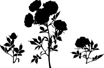 three black rose silhouettes isolated on white