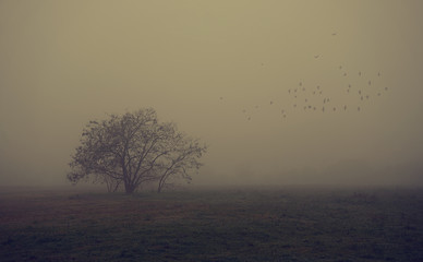 Old tree in the field a foggy day Fototapete