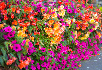 Beautiful pink, yellow, red flowers background