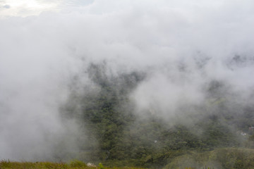 Cloudforest in Panama