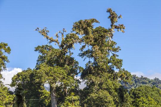 Beautiful landscape in Panama, Quetzal Trail