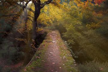 Bridge way in the woods.