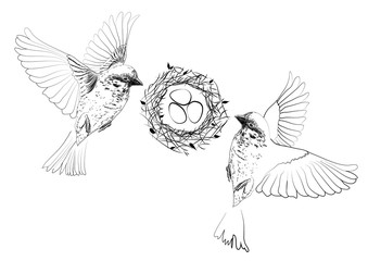 Illustration of birds flying over a nest with eggs.