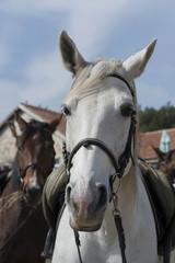 white horse with saddle