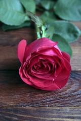 Single Rose on old rustic wood table