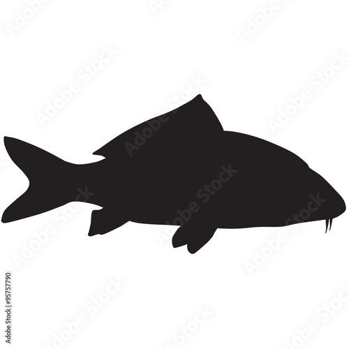 silhouette of a carp koi
