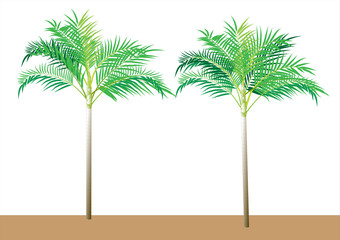 Palm tree on white background object isolated,vector