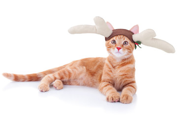 Christmas Rudolph Reindeer Cat