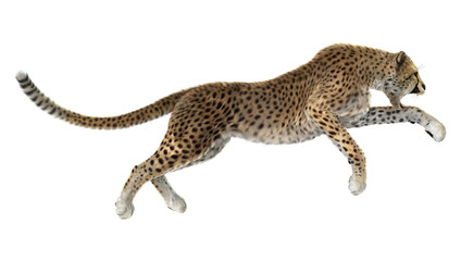 Big Cat Cheetah