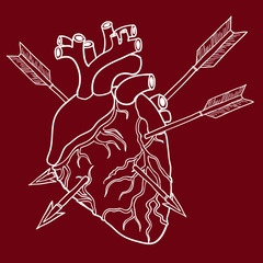 Human heart with arrows. Hand-drawn illustration
