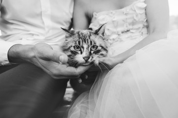 beautiful young wedding couple on a boat with a cat
