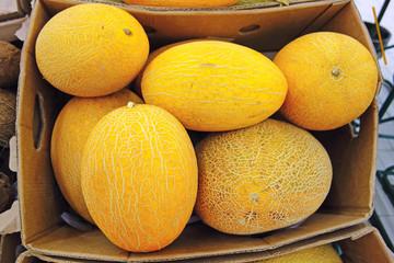 Yellow melon in a box