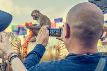 Person taking photos of monkeys with self phone.