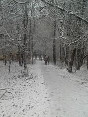 Две девушки идут по дорожке в парке после снегопада.