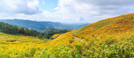 Mexican sunflower in Maehongson province of Thailand