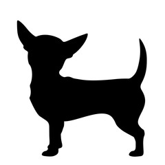 Vector black silhouette of a Chihuahua dog isolated on a white background.