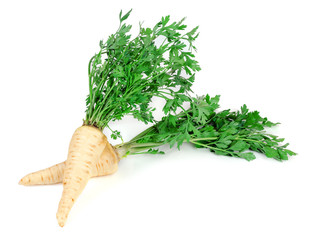 Root parsley3