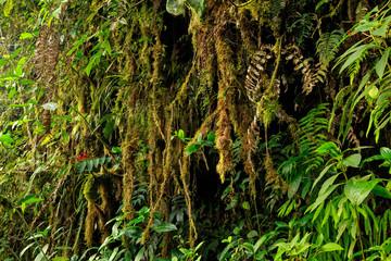 Amazon Wildlife, Ecuador
