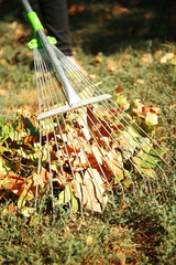 Fallen leaves and rake on green grass at the park