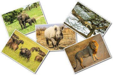 African wildlife collage