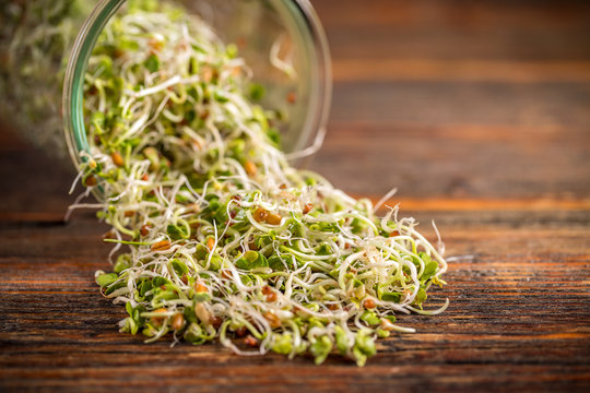 Mix of fresh sprouts