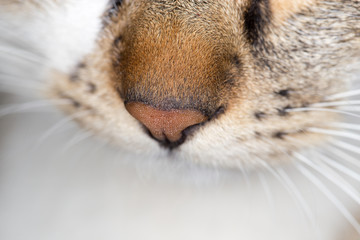 cat nose. close