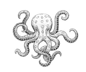 Octopus Engraving Illustration
