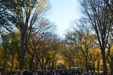Central Park in the autumn. Manhattan, New York, USA.