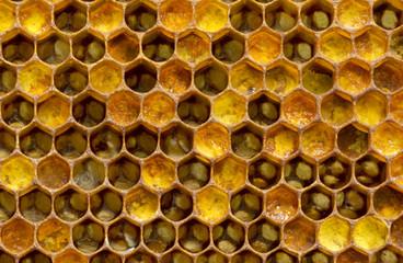 Pouring honey pollen