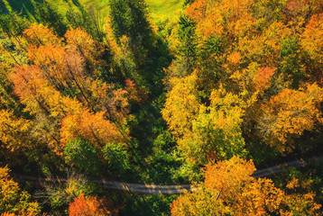 Top view of colourful leaves and trees in autumn