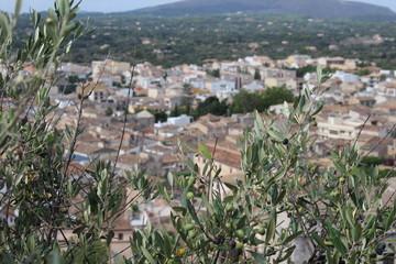 Olivenzweige vor dem Stadt