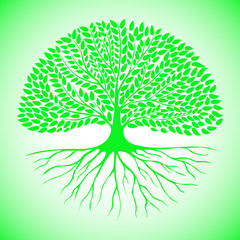 Green tree with an extensive root system and large leafy crown.