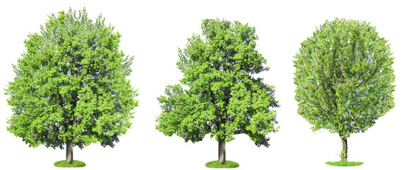 Green trees, isolated on white background