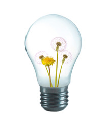 Green eco energy concept. Flowers growing inside light bulb, isolated on white