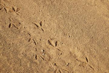 Bird tracks on ground