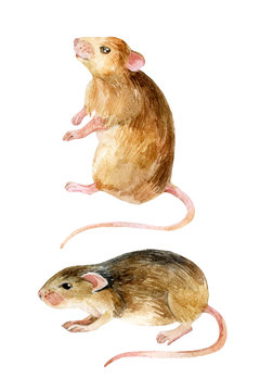 Mouse set. Two watercolor mice.