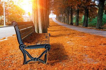 Wall Mural - Empty bench in the autumnal park